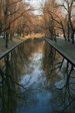 Η αντανάκλαση του δέντρου Στοκ εικόνες με δικαίωμα ελεύθερης χρήσης
