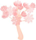 Η αντλώντας Ξένια Coral Στοκ φωτογραφία με δικαίωμα ελεύθερης χρήσης
