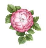 Η απεικόνιση του σκυλιού αυξήθηκε λουλούδι Στοκ Εικόνες