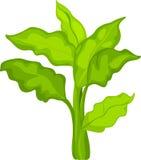 η απεικόνιση το λαχανικό Στοκ φωτογραφία με δικαίωμα ελεύθερης χρήσης