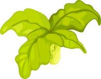 η απεικόνιση το λαχανικό Στοκ εικόνα με δικαίωμα ελεύθερης χρήσης