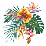 Η απεικόνιση ύφους Watercolor με τα εξωτικά λουλούδια και βγάζει φύλλα Βοτανική φωτεινή συλλογή φύσης που απομονώνεται στο άσπρο  στοκ εικόνες με δικαίωμα ελεύθερης χρήσης