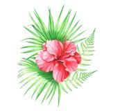 Η απεικόνιση Watercolor hibiscus ανθίζει με τα φύλλα και τη φτέρη φοινικών που απομονώνονται στο άσπρο υπόβαθρο Στοκ εικόνες με δικαίωμα ελεύθερης χρήσης