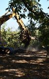 Η αποδάσωση του δασικού εκσκαφέα που χρησιμοποιήθηκε για να σκάψει επάνω τα δέντρο-κολοβώματα και τις ρίζες μετά από το δάσος αφα στοκ εικόνες