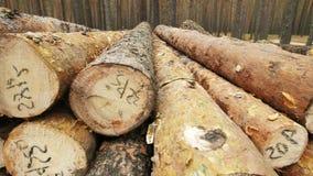 η αποκοπή καταγράφει πρόσφατα το συσσωρευμένο δέντρο επάνω απόθεμα βίντεο