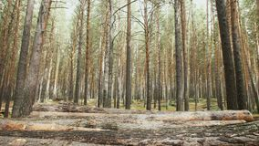 η αποκοπή καταγράφει πρόσφατα το συσσωρευμένο δέντρο επάνω φιλμ μικρού μήκους