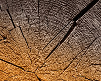 η αποκοπή ξεπέρασε ξύλινο Στοκ Εικόνες