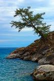 Απομονωμένο δέντρο στην τράπεζα Baikal Στοκ Εικόνα