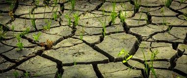 Η αποσύνθεση του χώματος μετά από μια ξηρασία, η επιρροή ενός επιθετικού περιβάλλοντος στη φύση Στοκ Εικόνες