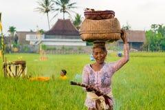 Η από το Μπαλί γυναίκα στο παραδοσιακό κοστούμι εκπληρώνει τις θρησκευτικές τελετές και τις προσφορές στους Θεούς στοκ εικόνες