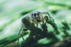 Η αράχνη θέτει Στοκ Εικόνες
