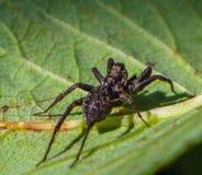 Η αράχνη και συνεχίζεται ήλιος στοκ εικόνα με δικαίωμα ελεύθερης χρήσης
