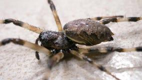 Η αράχνη κινείται αργά φιλμ μικρού μήκους