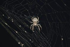 Η αράχνη νύχτας Στοκ φωτογραφία με δικαίωμα ελεύθερης χρήσης