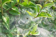 Η αράχνη που περιμένει το θήραμα στοκ εικόνες με δικαίωμα ελεύθερης χρήσης