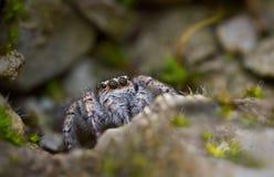 Η αράχνη στη σπηλιά Στοκ εικόνα με δικαίωμα ελεύθερης χρήσης