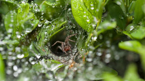 Η αράχνη υπερασπίζει τη φωλιά της στοκ φωτογραφίες με δικαίωμα ελεύθερης χρήσης