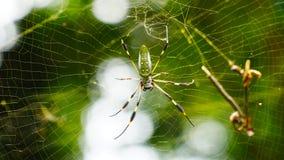 Η αράχνη στοκ εικόνα