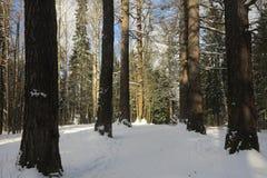 Η αρχή της άνοιξη στο δάσος στοκ φωτογραφία