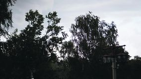 Η αρχή της δυνατής βροχής στο πάρκο πόλεων Άποψη από το δεύτερο όροφο απόθεμα βίντεο