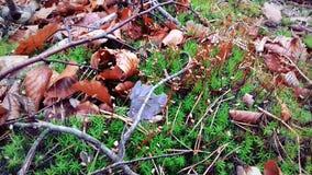η αρχή του φθινοπώρου Τα φύλλα έχουν πέσει ήδη Πράσινη χλόη στοκ εικόνες