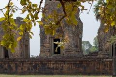 Η αρχαία άποψη ναών κοντά σε Angkor Wat, Siem συγκεντρώνει, Καμπότζη Προ άποψη ναών Rup με το φύλλο δέντρων Στοκ Φωτογραφίες