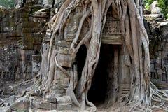 Η αρχαία άποψη ναών κοντά σε Angkor Wat, Siem συγκεντρώνει, Καμπότζη Ρίζες δέντρων γύρω από την καταστροφή ναών Στοκ Φωτογραφία