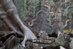 Η αρχαία καταστροφή του ναού TA Prohm, Angkor Wat σύνθετο, Siem συγκεντρώνει, Καμπότζη Ρίζες δέντρων στον τοίχο πετρών Στοκ Φωτογραφίες