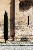 Η αρχαία πέτρα εμποδίζει τον τοίχο, με ένα δέντρο Στοκ Φωτογραφία