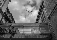 Η αρχιτεκτονική της πόλης Χίλντεσχαιμ, Γερμανία στοκ εικόνες