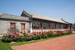 Η Ασία κινέζικα, Πεκίνο, κήπος EXPO, παλαιό κτήριο, προαύλιο, αυξήθηκε λουλούδι Στοκ Εικόνες