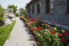 Η Ασία κινέζικα, Πεκίνο, κήπος EXPO, παλαιό κτήριο, προαύλιο, αυξήθηκε λουλούδι Στοκ εικόνα με δικαίωμα ελεύθερης χρήσης