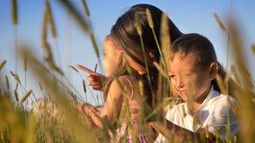 Η ασιατική μητέρα με τα παιδιά περπατά στον τομέα το καλοκαίρι, καθμένος στο σίτο, οικογενειακή έννοια, συγκομιδές στο πρώτο πλάν απόθεμα βίντεο