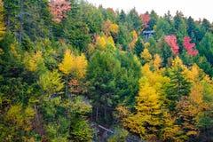 Η δασική σκηνή κοντά στη Μπλακγουότερ πέφτει το φθινόπωρο Στοκ εικόνα με δικαίωμα ελεύθερης χρήσης