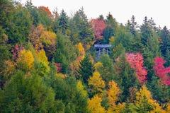 Η δασική σκηνή κοντά στη Μπλακγουότερ πέφτει το φθινόπωρο Στοκ Εικόνα