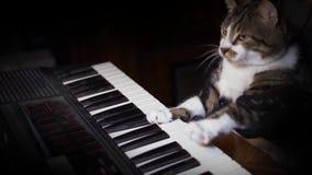 Η αστεία γάτα παίζει ένα πληκτρολόγιο, ένα όργανο ή ένα πιάνο απόθεμα βίντεο