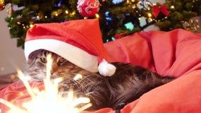 Η αστεία γάτα του Μαίην Coon δεδομένου ότι Άγιος Βασίλης φορά τα Χριστούγεννα ΚΑΠ κάθεται στο μαξιλάρι σε ένα όμορφο νέο διακοσμη απόθεμα βίντεο