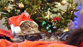 Η αστεία laizy γάτα του Maine coon δεδομένου ότι Άγιος Βασίλης φορά τα Χριστούγεννα ΚΑΠ κάθεται στο μαξιλάρι σε ένα όμορφο νέο δι απόθεμα βίντεο