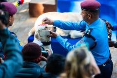 Η αστυνομία του Νεπάλ γιορτάζει Kukur Tihar στο Κατμαντού Στοκ Φωτογραφία