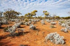 Η αυστραλιανή έρημος, ο εσωτερικός Στοκ Φωτογραφία