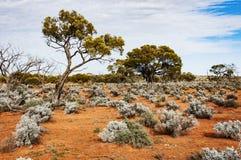 Η αυστραλιανή έρημος, ο εσωτερικός Στοκ φωτογραφίες με δικαίωμα ελεύθερης χρήσης