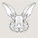 Η αφίσα με το πορτρέτο κουνελιών εικόνας Το χέρι σύρει τη διανυσματική απεικόνιση Στοκ Φωτογραφία