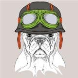 Η αφίσα με το πορτρέτο του σκυλιού που φορά το κράνος μοτοσικλετών επίσης corel σύρετε το διάνυσμα απεικόνισης Στοκ εικόνα με δικαίωμα ελεύθερης χρήσης