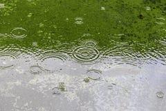 Η αφηρημένη επιφάνεια νερού με τα κύματα κύκλων σε πράσινο το υπόβαθρο Στοκ Εικόνες