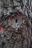 Η αφηρημένη σύσταση κορμών δέντρων στοκ εικόνες