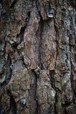 Η αφηρημένη σύσταση κορμών δέντρων στοκ φωτογραφία