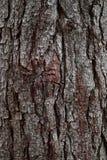 Η αφηρημένη σύσταση κορμών δέντρων στοκ εικόνα με δικαίωμα ελεύθερης χρήσης
