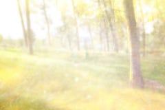 Η αφηρημένη φωτογραφία του φωτός εξερράγη μεταξύ των δέντρων και ακτινοβολεί bokeh φω'τα η εικόνα είναι θολωμένη και φιλτραρισμέν Στοκ Φωτογραφίες