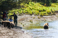 Η Αλάσκα καφετιά αντέχει το εθνικό πάρκο του Clark λιμνών εξέτασης Στοκ φωτογραφίες με δικαίωμα ελεύθερης χρήσης