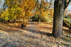 Η αλέα στη σκιά των δέντρων φθινοπώρου Στοκ Φωτογραφία